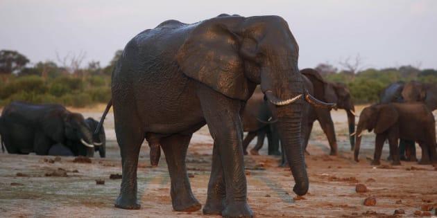 Des éléphants du parc national Hwange en octobre 2013. Image prétexte.