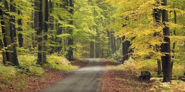 La mairie de Sainte-Ménehould (Marne) interdit la circulation de promeneurs dans la forêt communale les jours de chasse (Photo d'illustration).