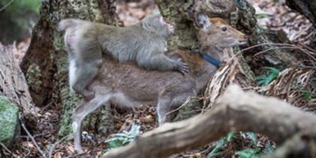 Dans une étude publiée dans Primates, des chercheurs français font état d'une étonnante découverte.