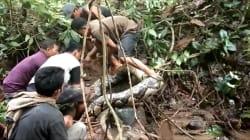 Un python de 8 mètres capturé en