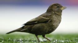 Plus le cerveau des oiseaux est gros mieux ils évitent les