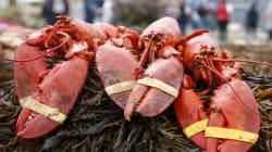 Ce restaurant fait respirer du cannabis aux homards pour les détendre avant