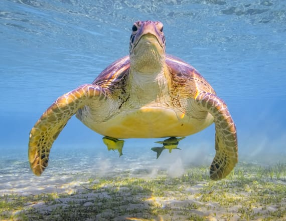 Enjoy some cute turtle photos on World Turtle Day