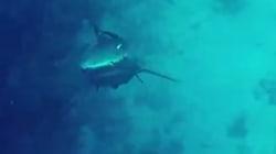 Il n'est pas près d'oublier sa rencontre avec un requin