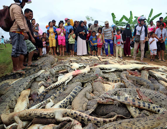 Villagers kill crocodiles in revenge attack