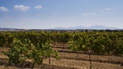 5 vinos de Querétaro que debes