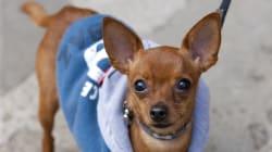 「ペットは家族」犬の看病に傷病手当、イタリア裁判所が認める