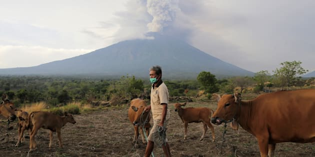 A farmer walks with his cattle as Mount Agung volcano erupts in the background in Karangasem, Bali.