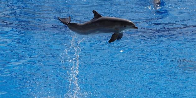 Delphinariums : l'interdiction de la reproduction des cétacés confirmée !