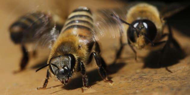 Les abeilles comprennent le concept de zéro