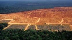 'MP da grilagem' pode regularizar mais de 2 mil imóveis em terras