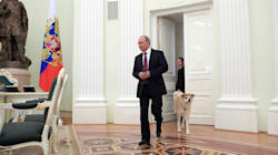 Perché il cane in ufficio aiuta anche i potenti a