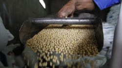 African Farmers Need To Bump Up Soybean