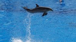 Le Conseil d'État maintient l'arrêté qui conduira à la fin de la captivité des dauphins (mais suspend une