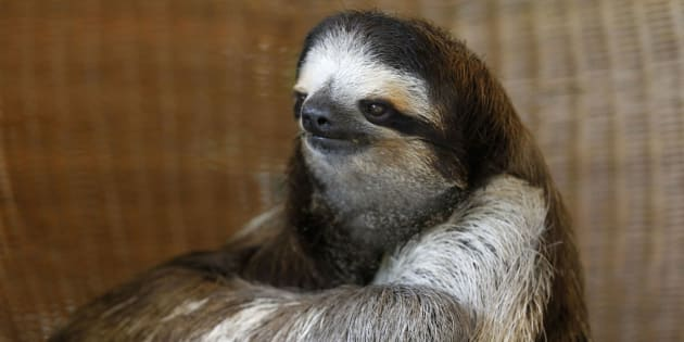 October 20 was International Sloth Day.