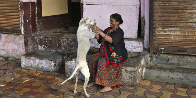 Kerala to curb the stray dog menace by opening dog zoos