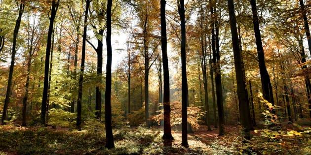 Pourquoi les arbres ne se font jamais surprendre par l'automne (31 octobre 2015, Belgique)