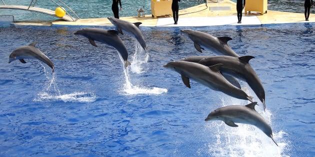 Annulation d'un arrêté interdisant la reproduction des dauphins en captivité — France