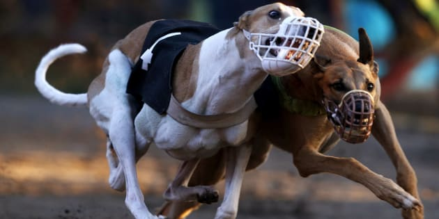 The NSW greyhound racing industry wants a ban lifted on the sport