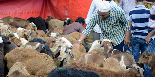 An Indian Muslim inspects goats at a livestock market for the sacrificial Eid ul Azha festival in Hyderabad on September 12, 2016. NOAH SEELAM/AFP/Getty Images