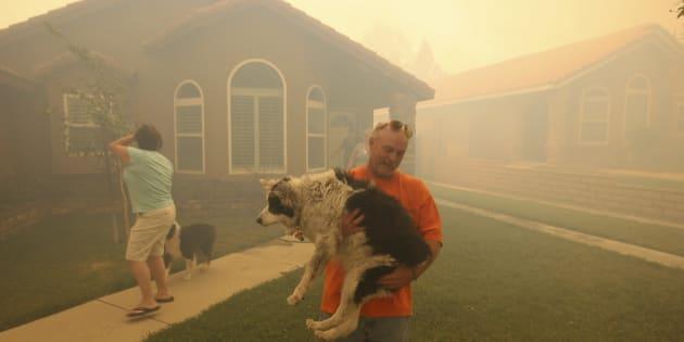 6 conseils pour protéger vos animaux de compagnie en cas d'incendie