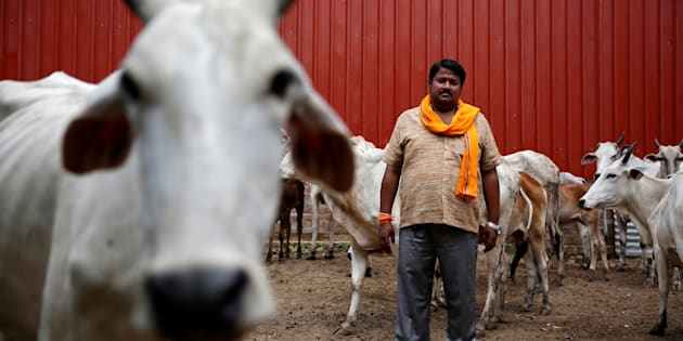 Digvijay Nath Tiwari, the commander of a Hindu nationalist vigilante group established to protect cows, is pictured with animals he claimed to have saved from slaughter, in Agra.