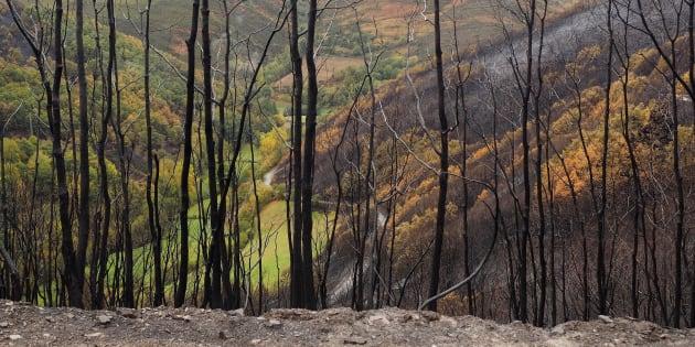 Paisaje de la Reserva Natural en San Martin de Cereixedo (Lugo) afectado por la oleada de incendios en Galicia. EFE/Eliseo Trigo