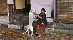From Mass Culling Of Stray Dogs, Kerala Makes A U-Turn To Propose Zoos For