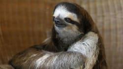 Happy International Sloth Day! (For