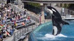 Final Show For California Killer Whales But They'll Never Be