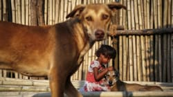 Stray Dogs Guard Abandoned Baby For Hours At Busy Bengal Railway Station As People Ignore