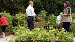 Obama alleato con l'Italia su cibo e