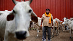 Man Claiming To Be Haryana Chief Of Maneka Gandhi's 'People For Animals' Says He Trained 'Accused' Who Assaulted Muslims In
