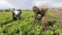 There Is No Clear Career Path Into Agriculture For SA's