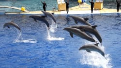 Le Conseil d'État annule l'arrêté interdisant la reproduction des dauphins en