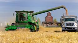 OGM: le Japon rouvre la porte au blé