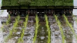 「食用米」復活へ模索続ける「飯舘」「南相馬」の篤農家たち--寺島英弥