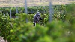 5 vinos de Coahuila que debes