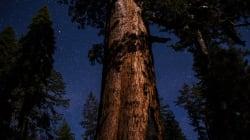 Una gran razón para visitar el parque Yosemite cuando