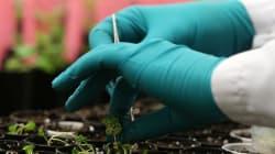 L'UE autorise le rachat de Monsanto par
