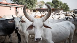 Uttarakhand Will Now Have Police Teams Dedicated To The Protection Of 'Cow