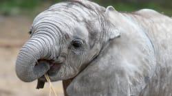 Trump Back-Flips On Elephant Trophy Imports, Calling It A 'Horror
