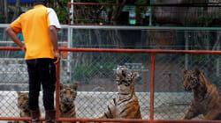 Un fotografo è entrato in un zoo per mostrare il prezzo che gli animali pagano per la vanità degli