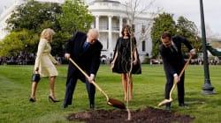 La photo de Trump et Macron qui plantent un chêne à la Maison Blanche vaut le