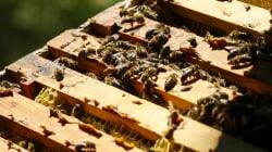 La justice suspend deux pesticides soupçonnés de nuire aux