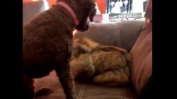 El vídeo de un perro y un gato que lleva ya casi un millón de 'me gusta' en