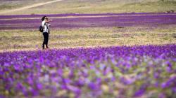 El desierto más seco del mundo florece después de una lluvia
