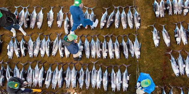 KATSUURA TUNA MARKET, KATSUURA, WAKAYAMA, JAPAN - 2013/03/21: Buyers inspecting tuna at the tuna market in Katsuura on the Kii Peninsula, the premium tuna auction in Japan. (Photo by Leisa Tyler/LightRocket via Getty Images)