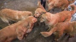 Perritos juguetones, la nueva e inesperada 'vacuna' contra la malaria en