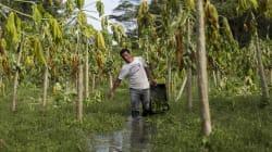 Por que o cadastro Ambiental Rural avança a passos lentos no